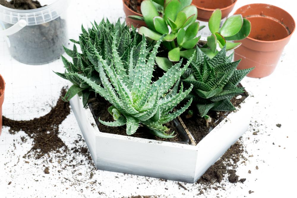 Schereleimpapier diy upcycling idee mini sukkulenten for Garten idee 2017